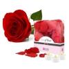 Pétales de Roses et Bougies LED